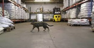 warehouse cat
